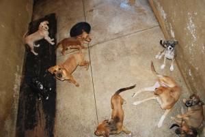 Segundo vereador, animais estão limpos e bem tratados, conforme foi verificado por ele.