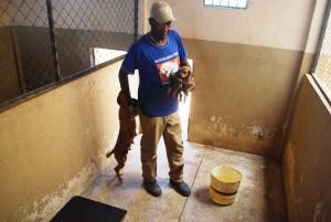 Funcionário durante tratamento dos animais que estão no canil.