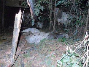 Dois animais acabaram atropelados por um veículo que passava pelo local.