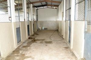 Há pouco mais de um ano, canil foi alvo de várias denúncias de maus tratos a animais.