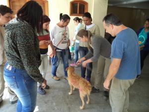 Equipe durante vacinação de animal.