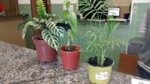 Plantas furtadas por rapaz em viveiro, no Bom Pastor.