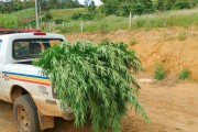 PM prende jovem acusado de plantar pés de maconha em cafezal