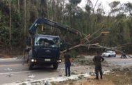 Árvore cai no trecho Manhuaçu-Realeza
