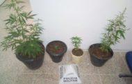 Jovem é preso em Lajinha por tráfico de drogas