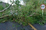 Quedas de árvores e danos em residências são causados por rajadas de vento em Ipanema