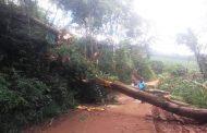 Árvores com risco de queda na estrada são cortadas em Bom Jesus de Realeza