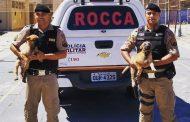 11° Batalhão recebe doação de dois cães para a ROCCA