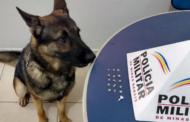 Cão de faro ajuda na apreensão de drogas