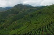 Agricultores familiares de Espera Feliz viram referência na produção de cafés especiais