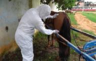 SES MG realiza ações de combate à Febre Maculosa em Mutum