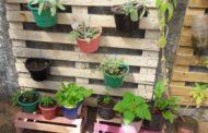 Hortas domésticas são alternativas para alimentação nutritiva e diversificada