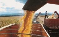 Minas Gerais tem previsão de safra recorde de grãos