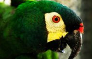 Entrega de animais silvestres e exóticos cresce 71% em Minas Gerais
