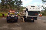Dois veículos com identificação clonada são apreendidos em Realeza