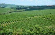 Receita de exportações do agro mineiro cresce 15% no primeiro trimestre