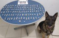 Cão de faro localiza drogas no bairro Santa Terezinha