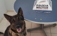 Cão de faro encontra drogas na rua São Mateus