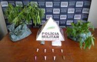 Acusado de tráfico detido e drogas recolhidas